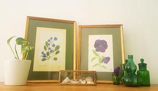 Pareja cuadros botánica vintage