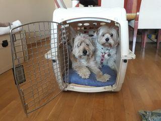 Transportin perros Medianos