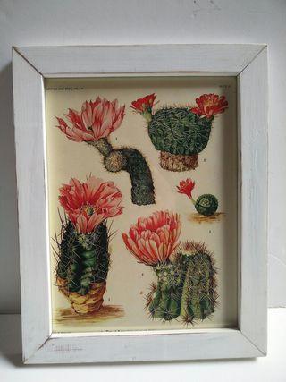 Cuadro lámina Cactus