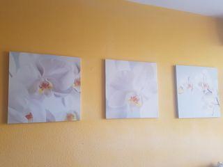 3 cuadros de fotografia de orquídeas