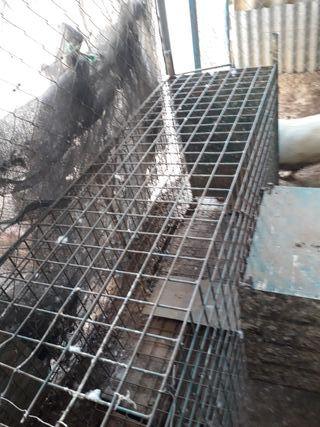 Vendo jaula para coger alimañas