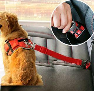 Cinturón de seguridad para mascota.