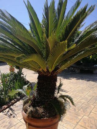 la planta tiene 1.80 apex.