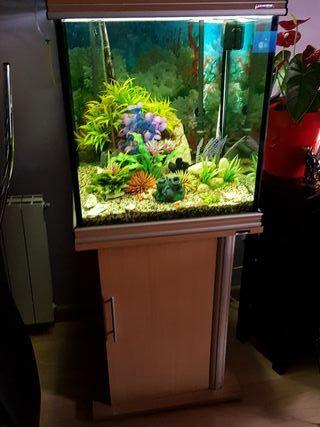 Acuario de peces tropicales, 200litros