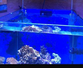 acuario marino 60x60