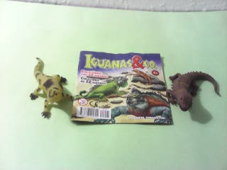 Iguanas and co. lote