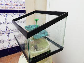 tortuguera, terrario o acuario