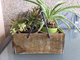 Macetero vintage con plantas suculentas