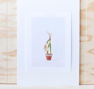 Art. /foto/decoración