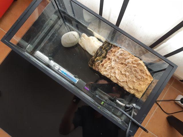 Tortuguero con calentador y filtro