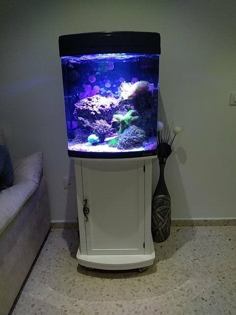 Pecera completa de agua salada con mueble