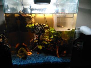 acuario cubic 50l+ lampara led