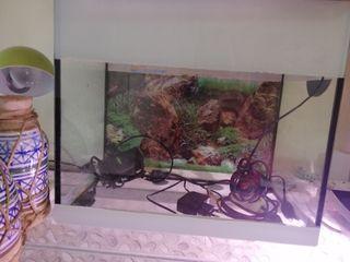 terrario o acuario