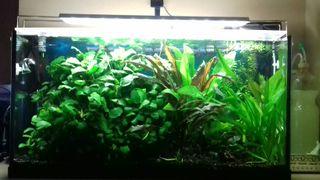 Lote plantas de acuario.