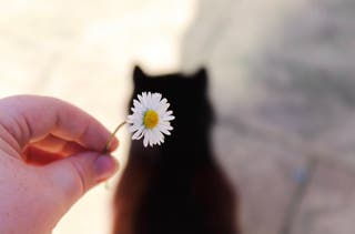 Cats and Daisy's