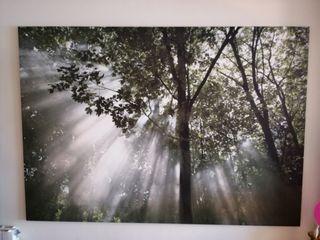 Mural grande de bosque y luz. 200x140cm