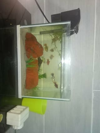 pecera /acuario