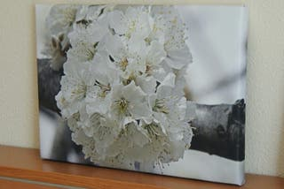 Cuadro de cerezo en flor.