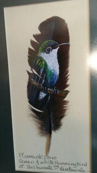 cuadro de colibrí con marco.