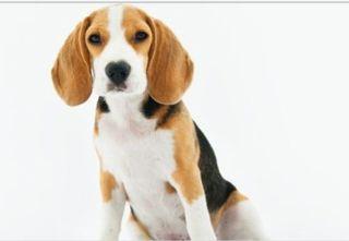Cuidador de perros y gatos