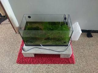 acuario 60 litros