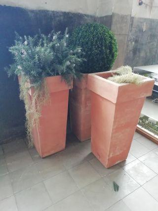 plantas decorativas.