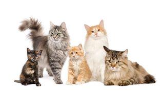 Cuidadora gatos
