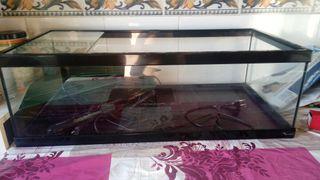 Tortuguera tortum aquatlantis 75 negra