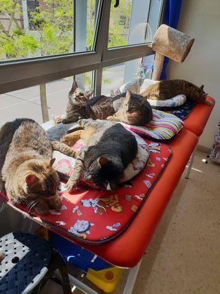 Cuidadora,de gatos,en mi casa.Mucha, experiencia
