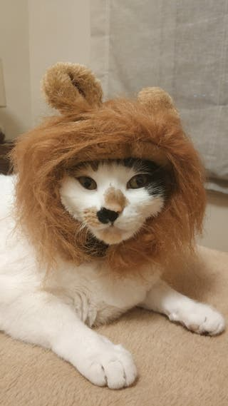 peluca para mascotas