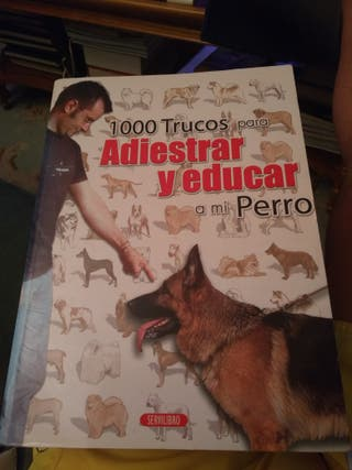 Adiestrar y educar al perro