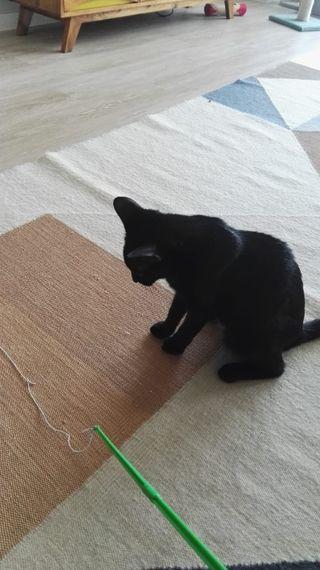 cuidador de Gatos