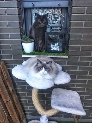 Cuidador de mascotas y gatos