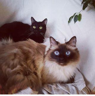 cuidador para dos gatos del 16 al 26 de agosto