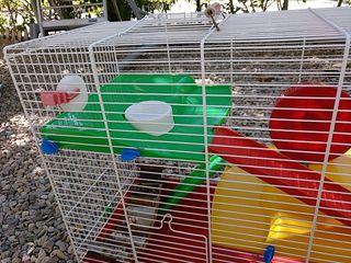 Jaula Grande para Hamster.