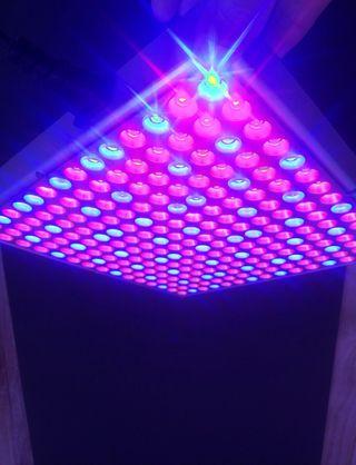 Lámpara LED para crecimiento de plantas