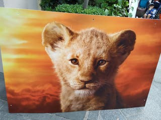 Pictures of The Lion King
