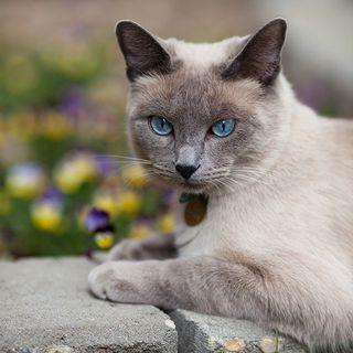Cuidadora de gatos.