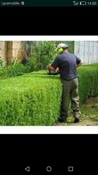 servicios de jardinería en general