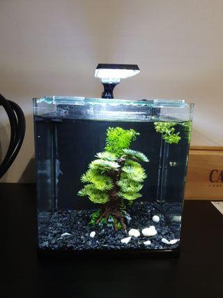 nano acuario