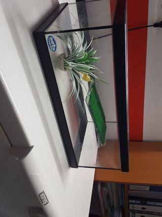 tortuguera con filtro y planta