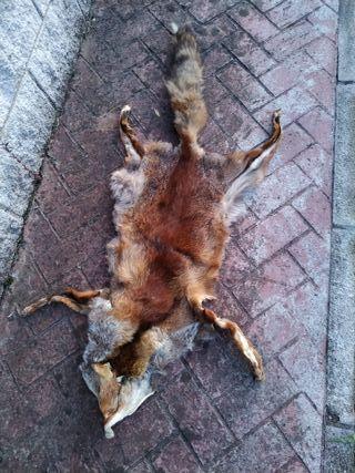 piel curtida de raposa antigua