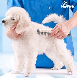 Peine eléctrico cortanudos para perros
