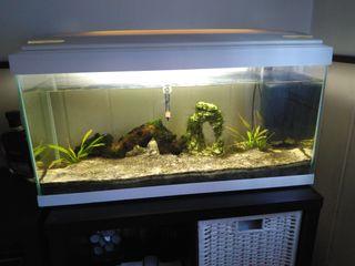 acuario de 100 lts