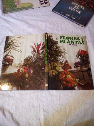 1978 - Flores y plantas en casa - Stevenson