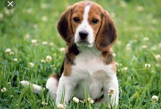 cuidado de perros. animales