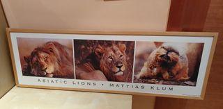 cuadro ikea lions