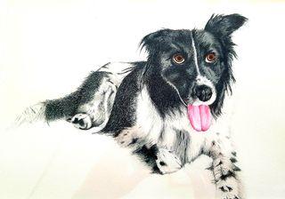 pinto mascota cuadro retrato