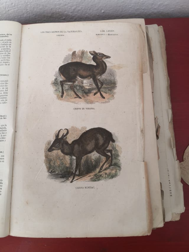 Los tres reinos de la naturaleza 1800