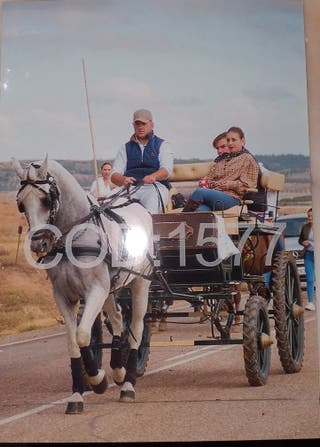 coche de caballos jardinera
